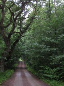Här mitt i skogen stannade vi och fikade.